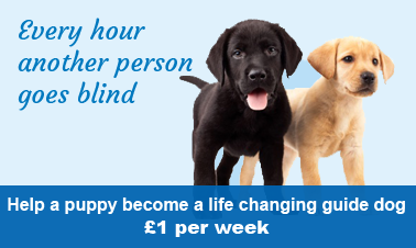 Guide dogs for blind people